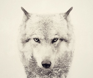 wolf, wallpaper, and white image
