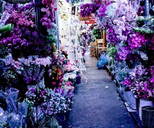 flowers, purple, and thailand image
