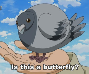 butterfly and anime image