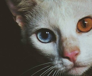 cat, eyes, and animal image