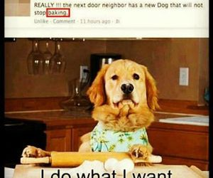 funny, dog, and lol image
