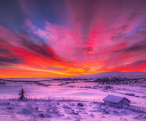 nature, pink, and snow image