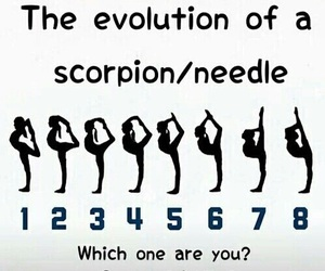 needle, scorpion, and evolution image