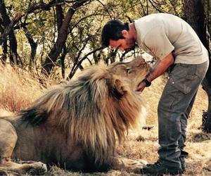 lion, wild, and kevin richardson image