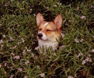 dog, animal, and wallpaper image