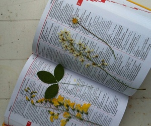 flowers, art, and book image