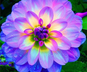 blue, pink, and water drops image