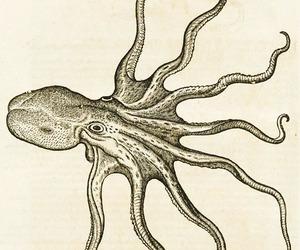 octopus image