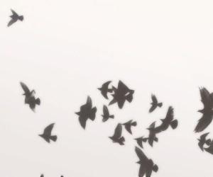 bird, header, and black image