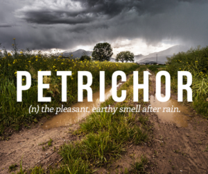 words, quotes, and petrichor image