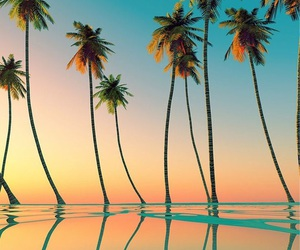 coconuts, sea, and plage image