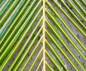 leaf, palm, and plant image