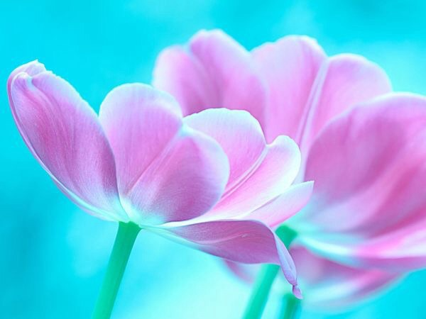 blue, flowers, and pastels image