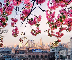 flowers, city, and spring image