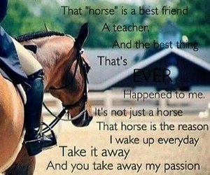 emotion, happiness, and horse image