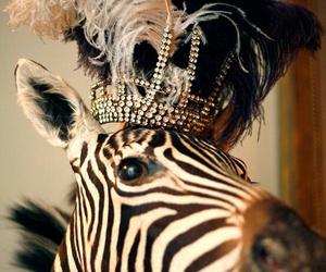 zebra, crown, and animal image
