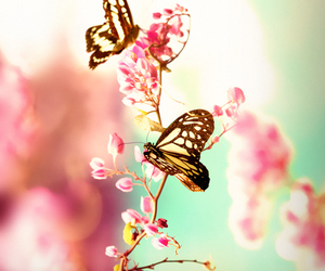 675b63fb9 44 images about Butterfly fly away.. on We Heart It | See more about ...