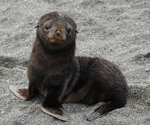 seal and baby image