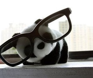 panda, cute, and glasses image