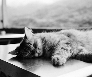 cat, black and white, and animals image