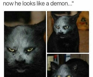 cat, funny, and demon image