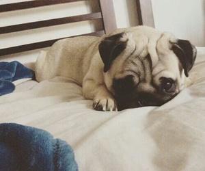 dog, love, and pug image