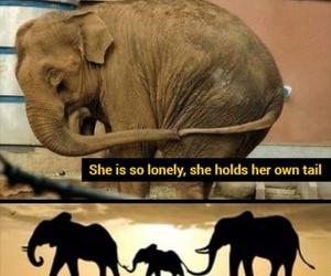 animal, elephant, and sad image
