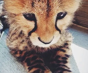 cute, animal, and cat image
