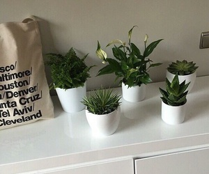plants and shopping image