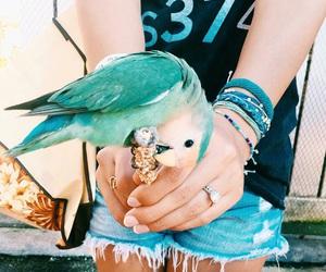 summer, animal, and bird image