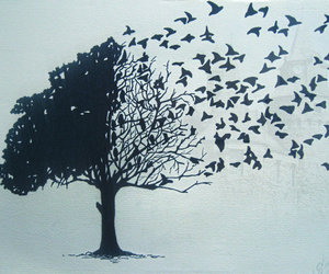 birds, freedom, and silhouette image