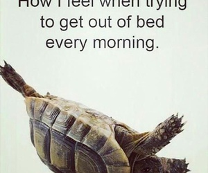 morning, bed, and funny image