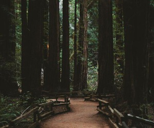 forest, mountains, and trees image