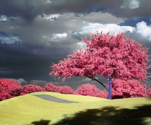 blossom, inspiration, and japan image