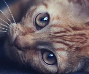 animals, kitty, and still life image