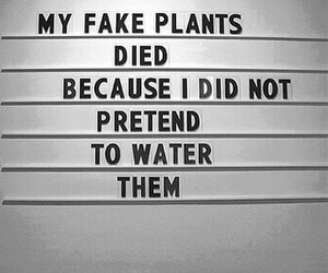 quotes, plants, and fake image