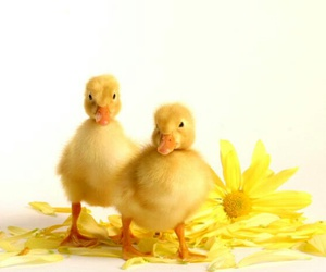 animals, baby, and easter image