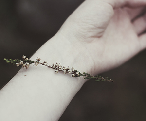 flowers, hand, and arm image