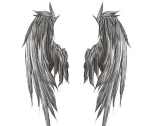 wings, drawing, and fly image