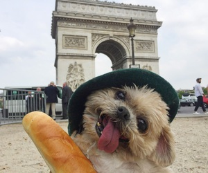 dog, funny, and travel image