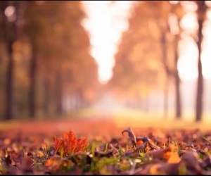 autumn and autumn leaves image