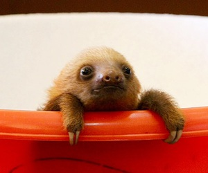 baby, sloth, and cute image
