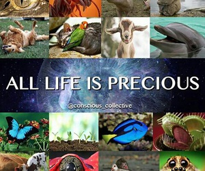 animal, life, and precious image