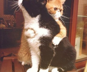 embrace, cats, and funny image