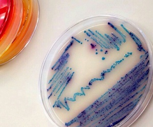 beautiful, color, and lab image