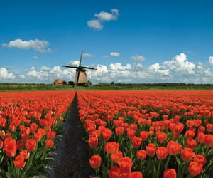 countryside, field, and flowers image