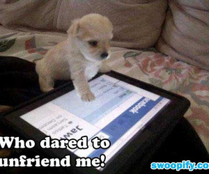 facebook, cute, and dog image