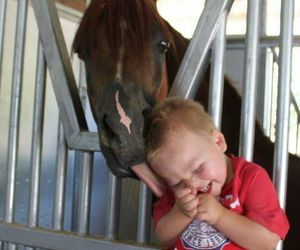 horse, animal, and baby image