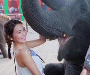 elephants, goals, and wild image