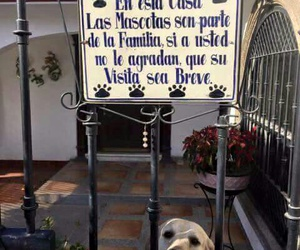 animals, dogs, and frases image